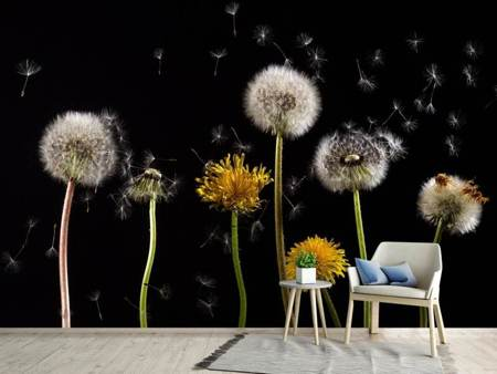 Photo Wallpaper The phases of dandelion