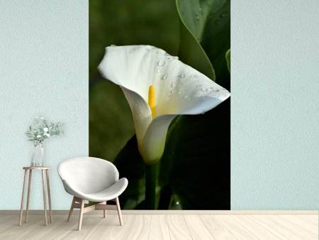 Photo Wallpaper White calla with morning dew
