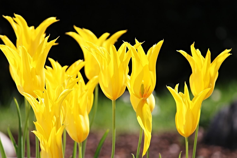 Картинки космодрома байконур с тюльпанами беретка крючком