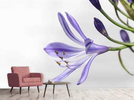 Photo Wallpaper Lily flower in purple