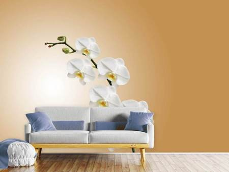Photo Wallpaper White orchids XL
