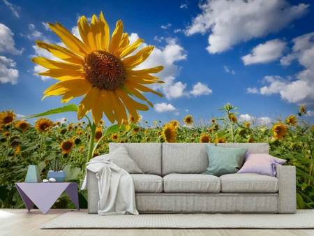 Photo Wallpaper A sunflower among many