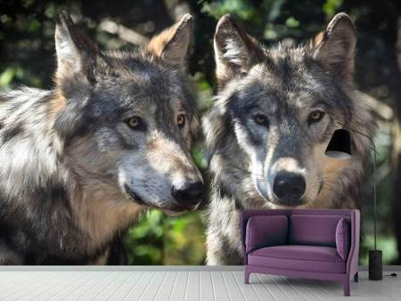 Photo Wallpaper 2 wolves