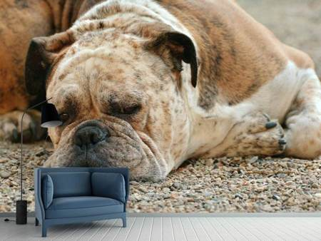 Photo Wallpaper Tired boxer