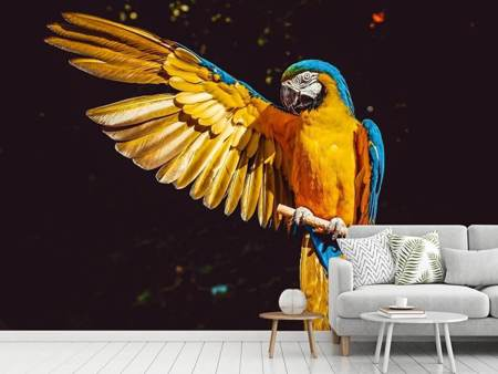 Photo Wallpaper The macaw