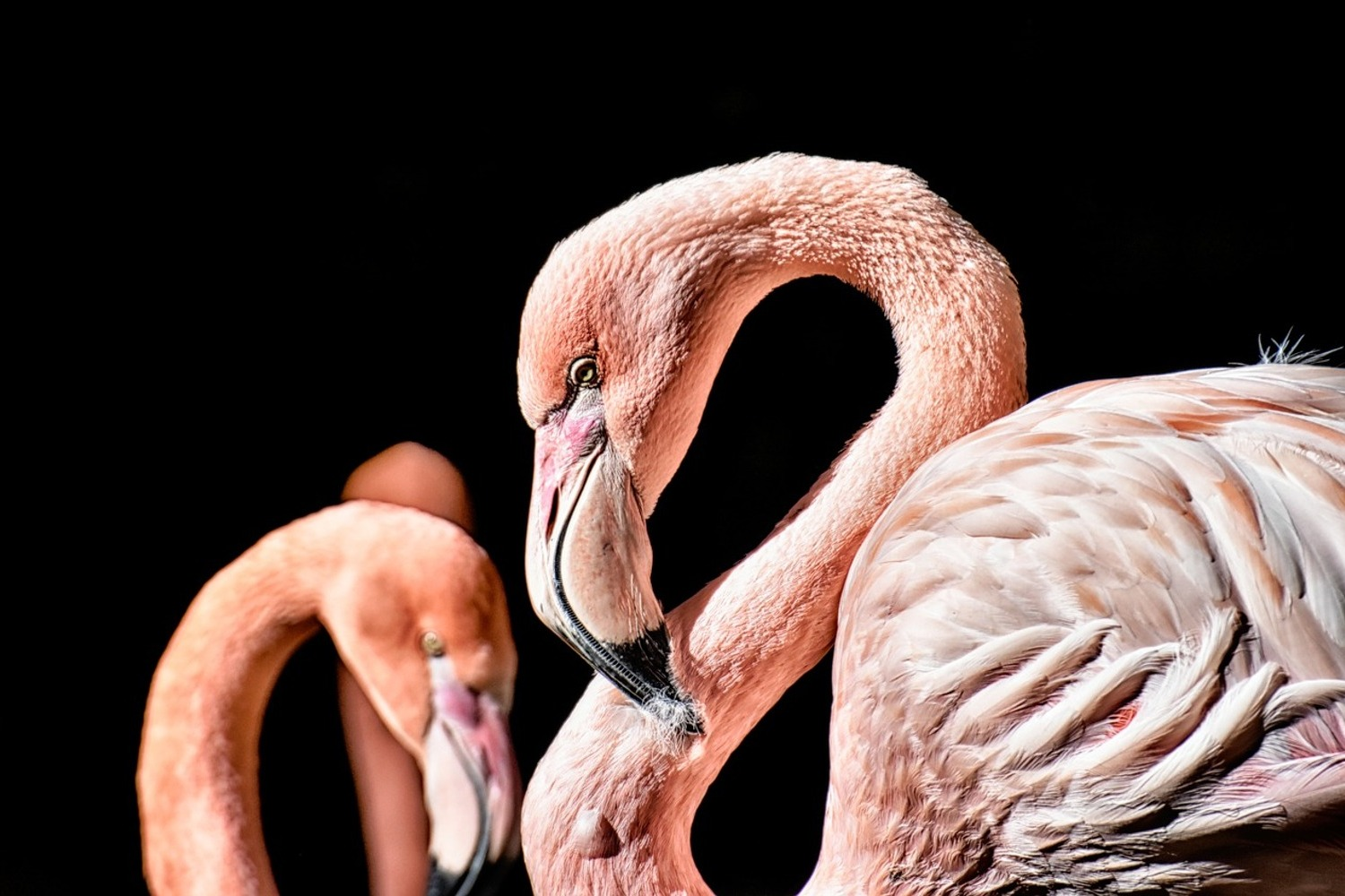 Photo Wallpaper Magnificent flamingos