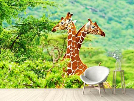 Photo Wallpaper Giraffes Love