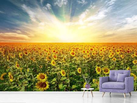 Photo Wallpaper A Field Full Of Sunflowers