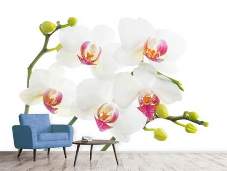 Photo Wallpaper Orchids Love