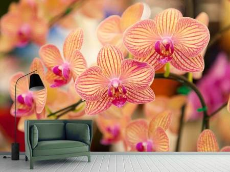 Photo Wallpaper Exotic Orchids