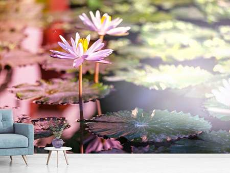 Photo Wallpaper Lilies In Pond