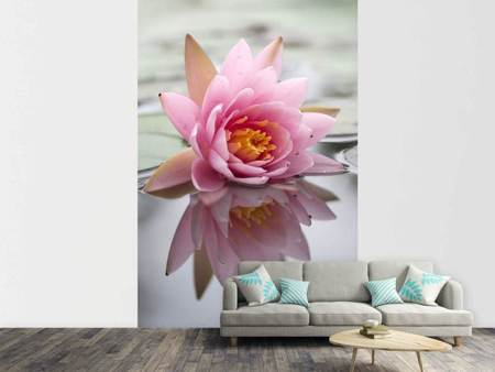 Photo Wallpaper Lotus