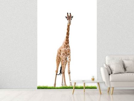 Photo Wallpaper The Long Giraffe