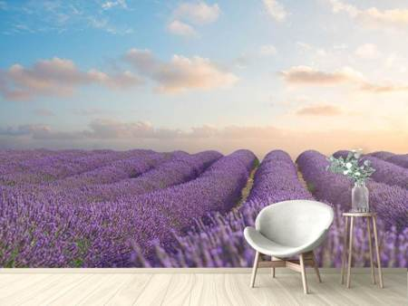 Photo Wallpaper The Blooming Lavender Field